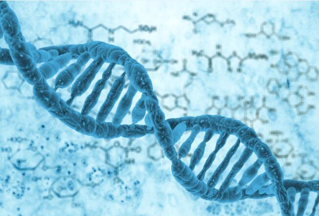 高效液相气相 代谢德赢ac米兰合作伙伴 (短链脂肪酸,氨基酸)