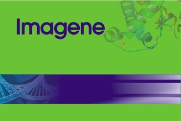 长片段PCR扩增试剂盒