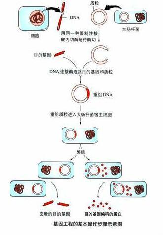 重组蛋白表达纯化服务