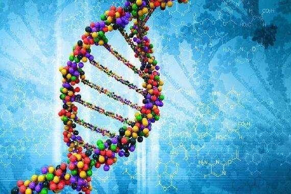 高质量基因合成服务